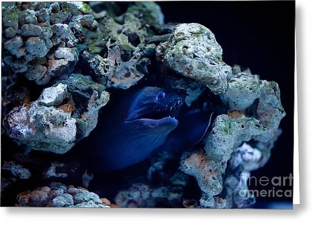Moray Eel Or Muraenidae Fish Greeting Card by Arletta Cwalina