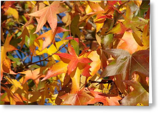 More Autum Leaves Greeting Card by Liz Vernand