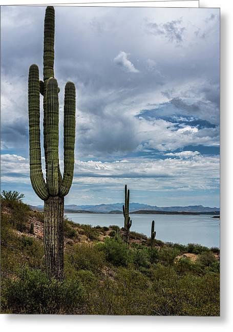 Greeting Card featuring the photograph More Beauty Of The Southwest  by Saija Lehtonen