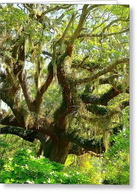More Spanish Moss Please Greeting Card by Beth Akerman
