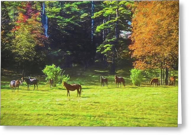 Morgan Horses In Autumn Pasture Greeting Card