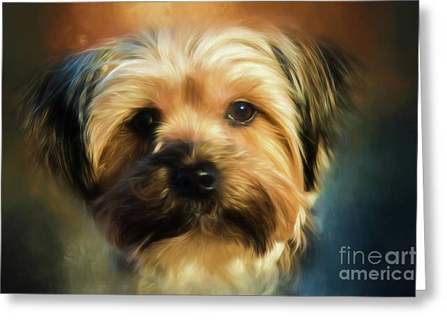 Morkie Portrait Greeting Card
