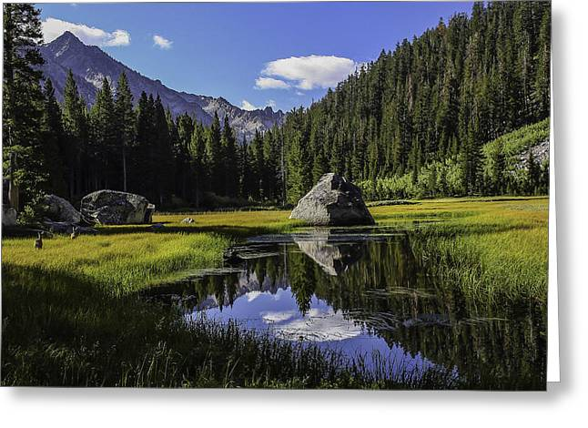 Morning At Grouse Meadow Greeting Card