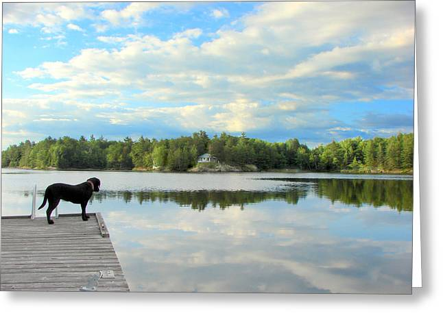 Morning At Pine Lake Greeting Card by Bruce Ritchie