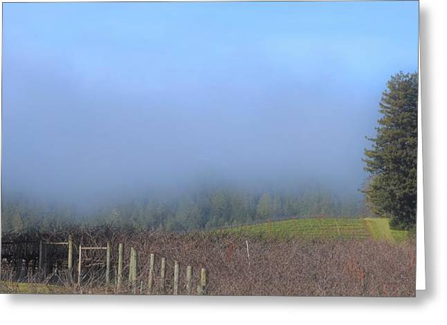 Morning At The Vinyard Greeting Card