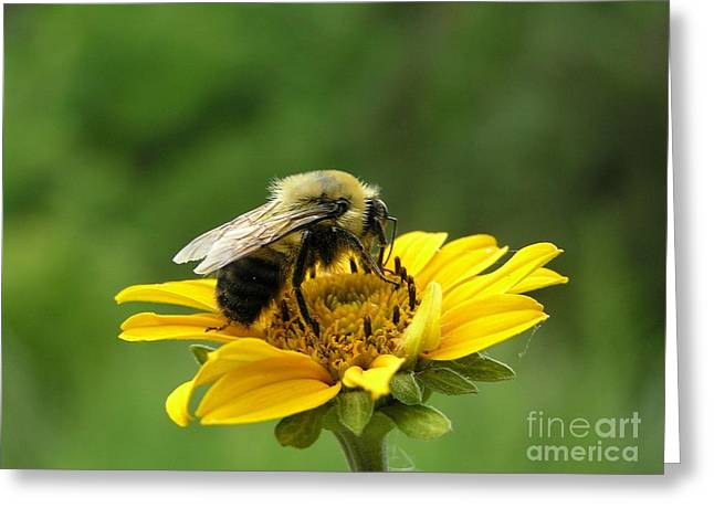 Morning Bee Greeting Card