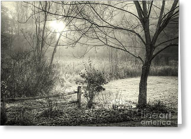 Morning Breaking Greeting Card by Betsy Zimmerli