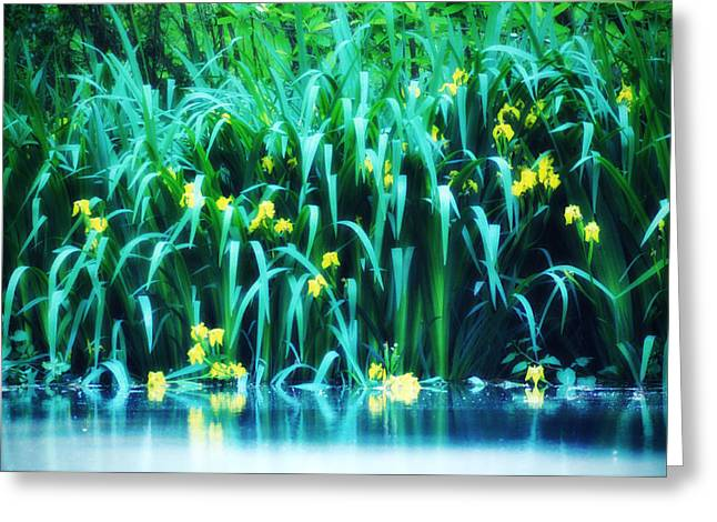 Morning By The Pond Greeting Card by Bill Cannon