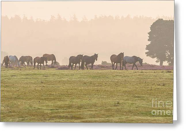 Morning Commute  New Forest Greeting Card by Richard Thomas