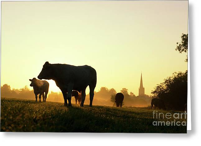 Morning Cows Greeting Card by Tim Gainey