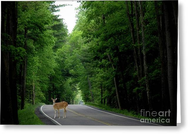 Morning Deer Greeting Card by Anthony Djordjevic