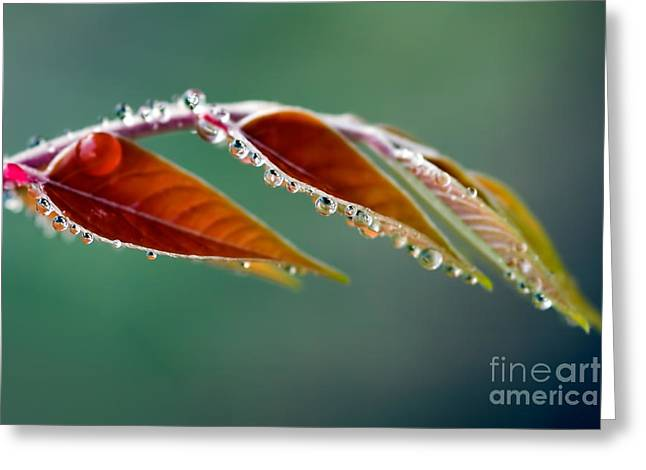 Greeting Card featuring the photograph Morning Dew by Joerg Lingnau