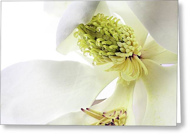 Morning Dew Magnolia Greeting Card by JC Findley