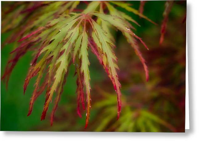 Greeting Card featuring the photograph Morning Dew by Michael Colgate