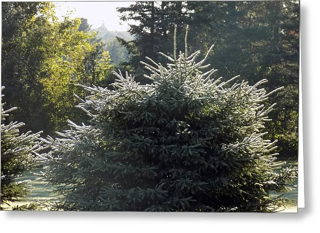 Morning Dew Shine Greeting Card by William Tasker