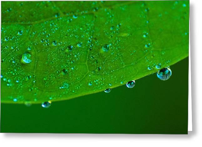 Morning Dew Greeting Card by Tim Nichols
