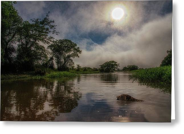 Greeting Card featuring the photograph Morning Dip by Wade Aiken