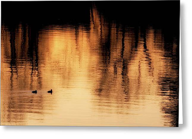 Greeting Card featuring the photograph Morning Ducks 2017 by Bill Wakeley