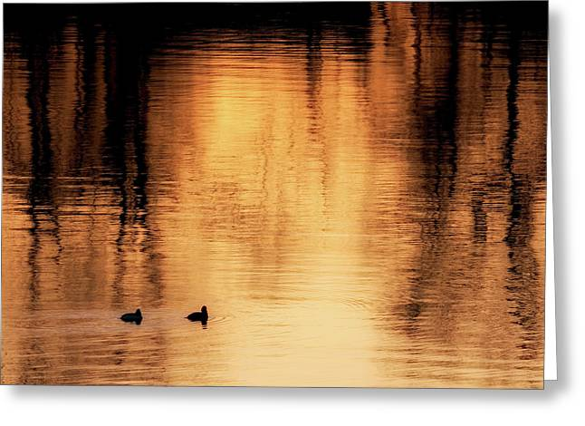 Greeting Card featuring the photograph Morning Ducks 2017 Square by Bill Wakeley