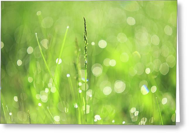 Morning Fairies. Green World Greeting Card by Jenny Rainbow