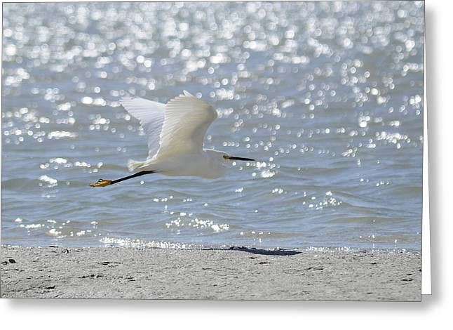 Morning Flight Greeting Card by Keith Lovejoy