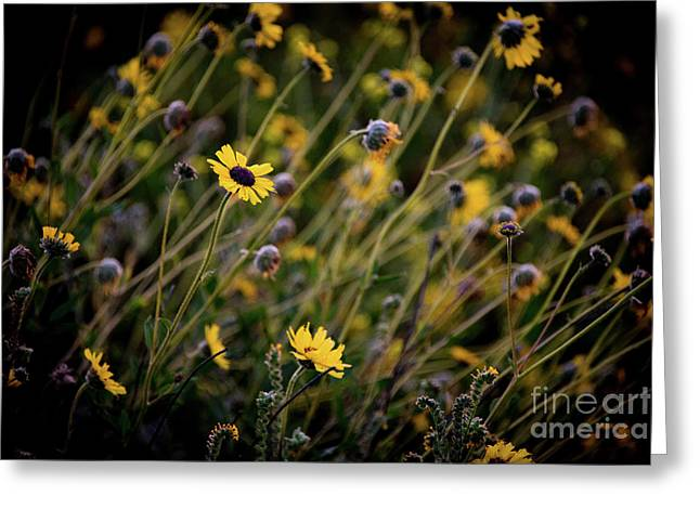 Greeting Card featuring the photograph Morning Flowers by Kelly Wade