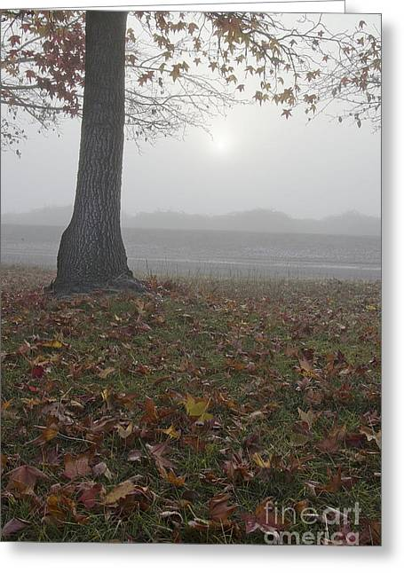Morning Fog Greeting Card by Jim and Emily Bush