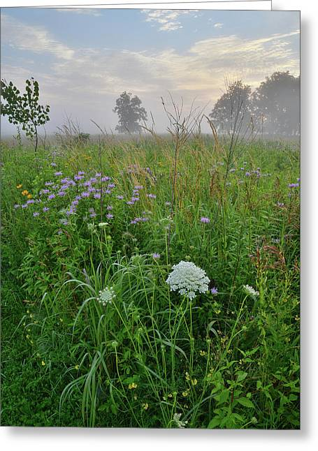 Morning Fog Over Glacial Park Prairie Greeting Card
