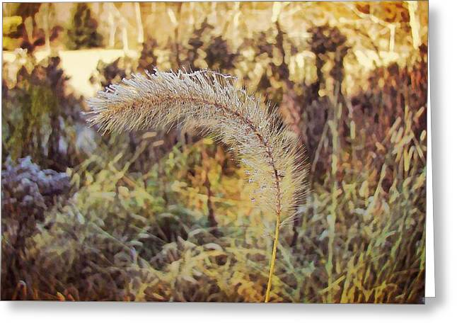 Morning Frost Greeting Card by JAMART Photography