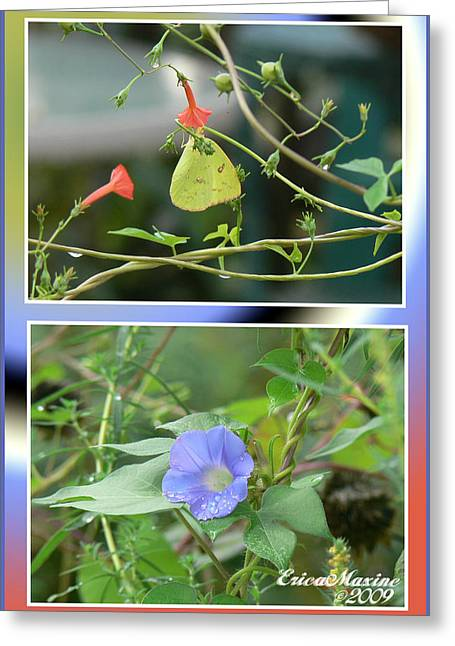 Greeting Card featuring the photograph Morning Glories And Butterfly by EricaMaxine  Price