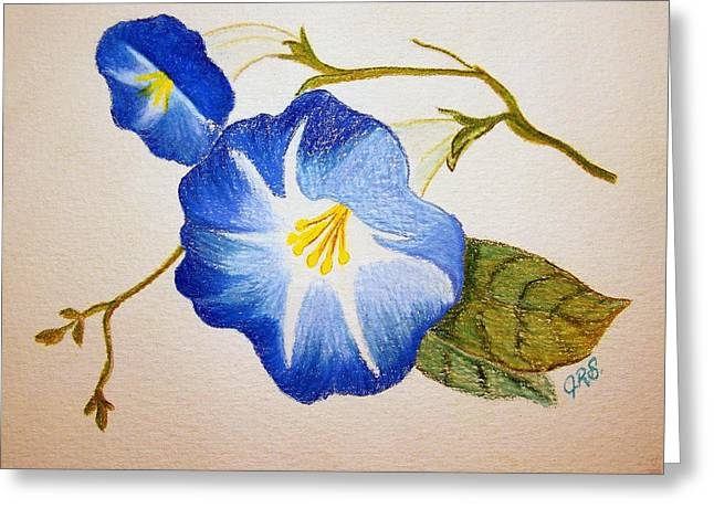 Morning Glory Greeting Card by J R Seymour