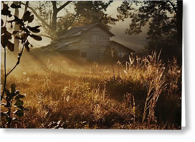 Morning Glory Greeting Card by Lori Mellen-Pagliaro