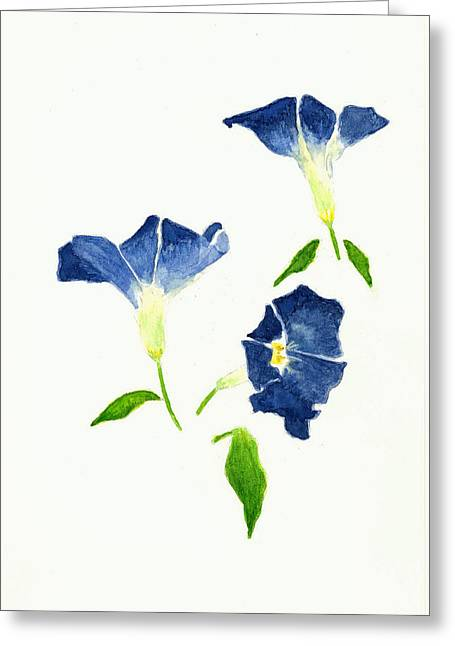 Morning Glory Greeting Card by Michael Vigliotti