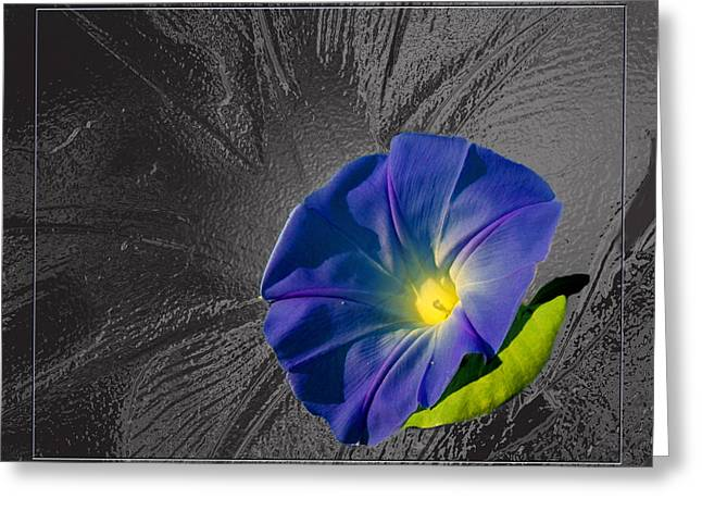 Morning Glory Greeting Card by Robert Clayton