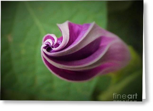 Morning Glory Swirl Greeting Card