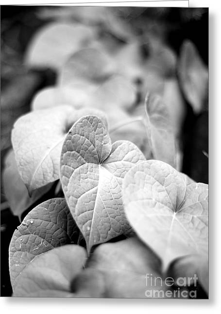 Greeting Card featuring the photograph Morning Glory Vines by Todd Blanchard
