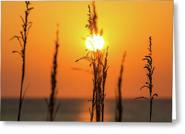 Morning Glow Greeting Card by AM Photography