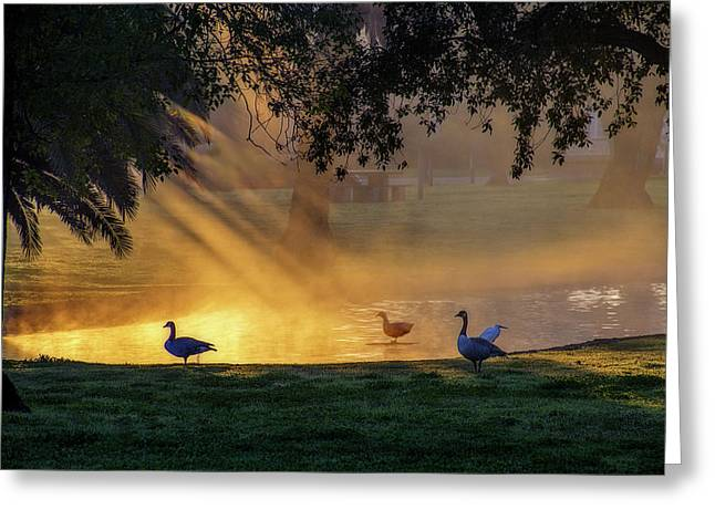 Morning Gold Greeting Card by Terry Davis