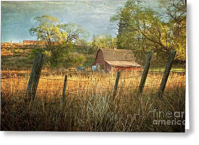 Morning Greets The Barnyard  Greeting Card by Beve Brown-Clark Photography