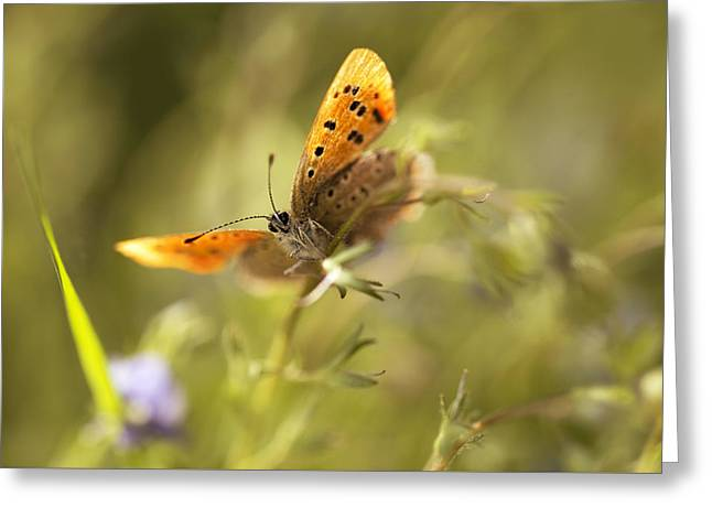 Morning Impression With Orange Butterfly Greeting Card by Jaroslaw Blaminsky