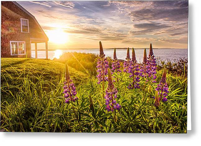 Morning In Maine Greeting Card
