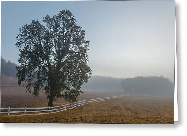 Morning In Paso Robles Greeting Card