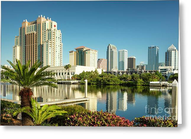 Morning In Tampa Greeting Card by Brian Jannsen