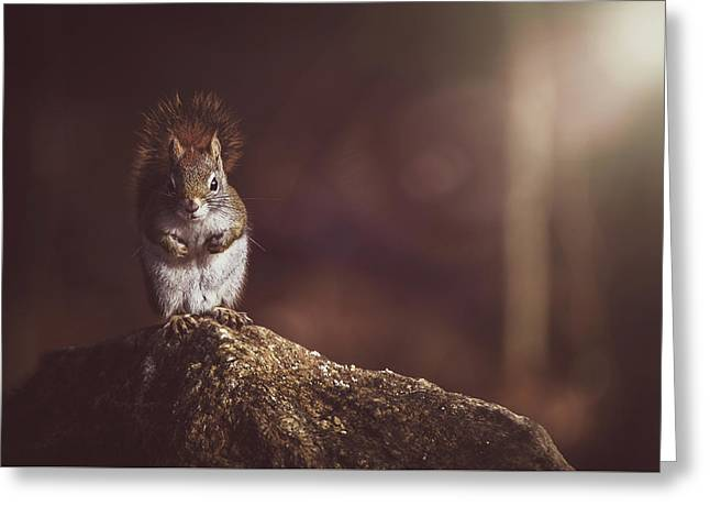 Morning In The Dark Forest Greeting Card