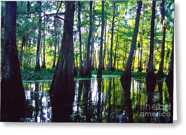 Morning In The Swamp Greeting Card by Thomas R Fletcher