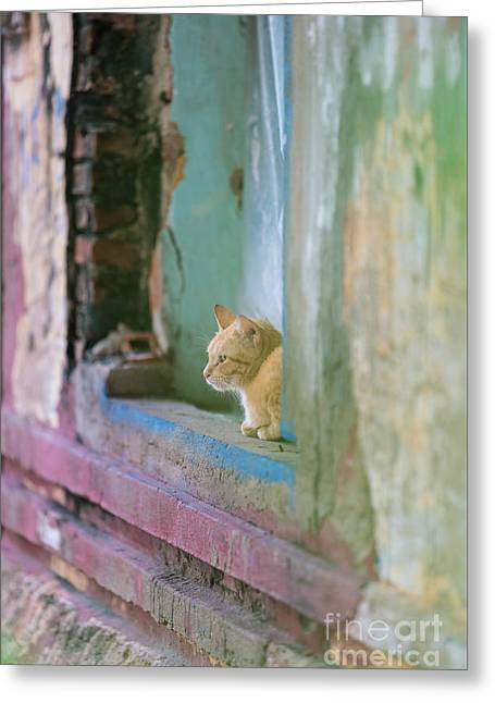 Morning In The Temple A Cats Perspective Greeting Card