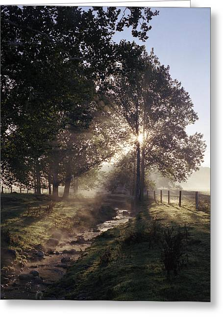 Greeting Card featuring the photograph Morning by Josean Rivera