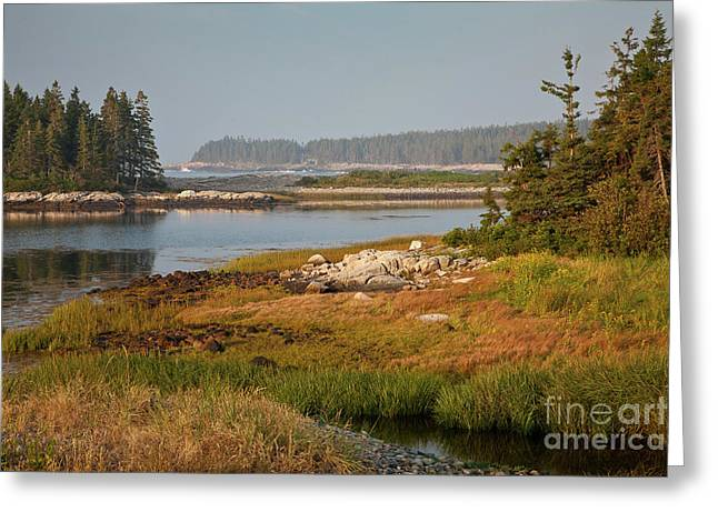 Morning Light At Schoodic  Greeting Card by Susan Cole Kelly