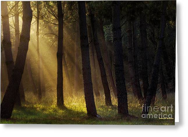 Morning Light In The Forest Greeting Card