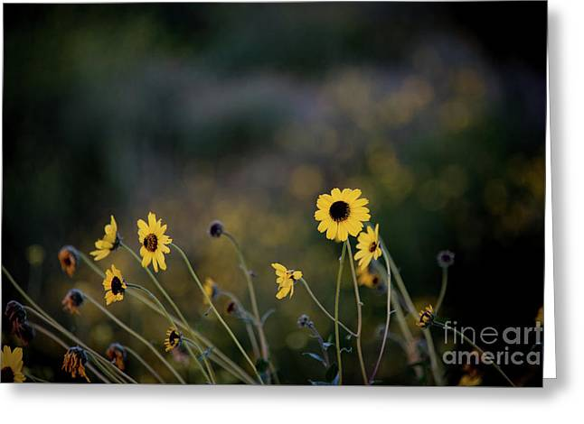 Greeting Card featuring the photograph Morning Light by Kelly Wade